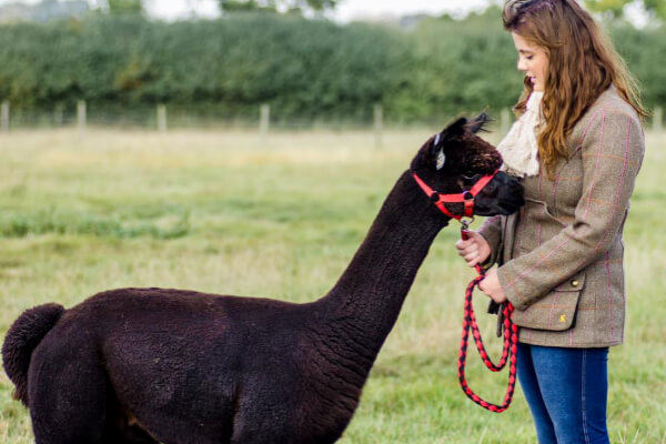 Alpaca and woman wearing knitted scarf