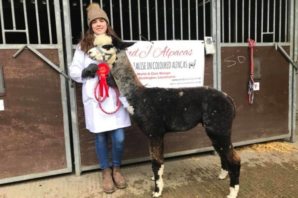 Lady standing with Alpaca showing off the ribbon