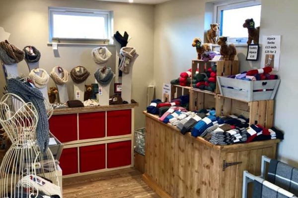Alpaca Outlet store