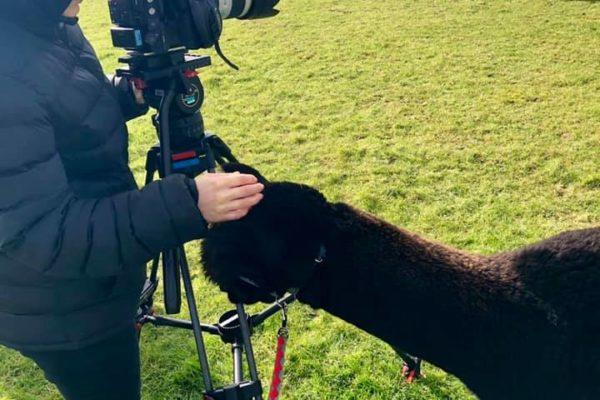 Alpaca interested in camera eqipment