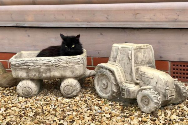 Cat in trailer of tractor and trailer garden ornament