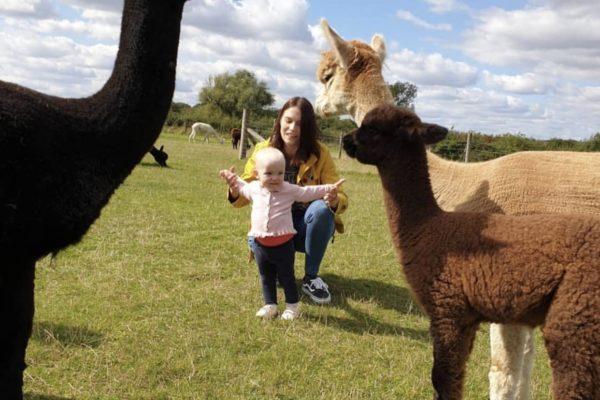 Mum and Child meeting alpacas