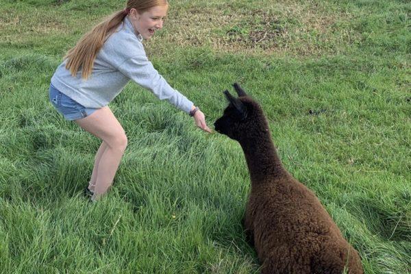 Meet & Greet Alpaca Experience
