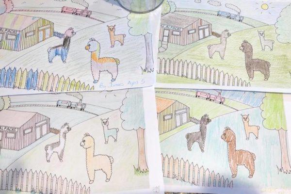 Alpaca colouring pictures