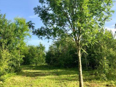 British countryside woodland walk