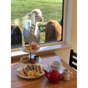 Afternoon Tea - Voucher