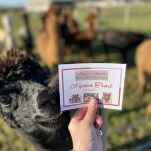 Alpaca Trail Gift Voucher